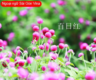 SGV, Tên các loài hoa bằng tiếng Hoa