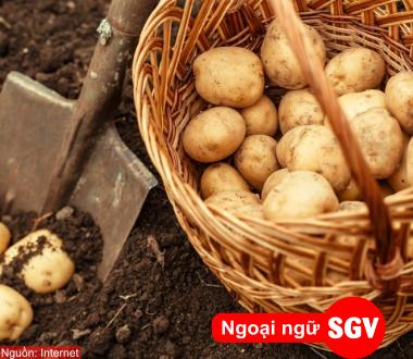 SGV, Danh từ dùng ở dạng số ít trong tiếng Nga