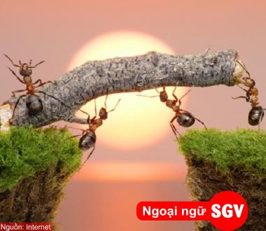 SGV, Một số thành ngữ trong tiếng Hoa