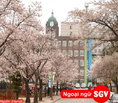 SaiGonVina, Visa thẳng du học Hàn Quốc