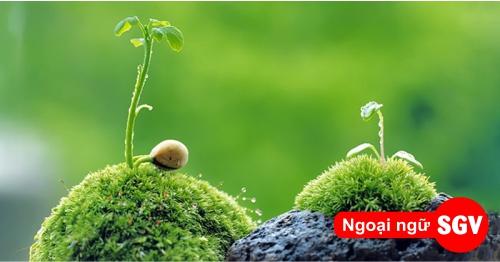 Thực vật tiếng Nga là gì, saigonvina